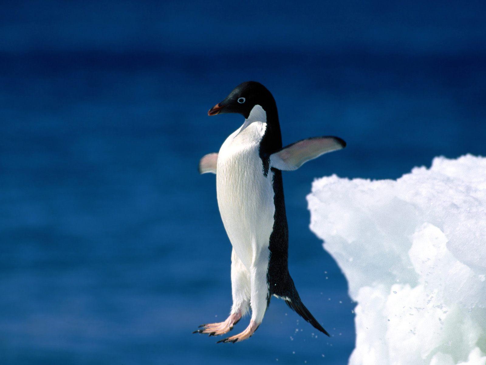Penguin Pictures 21