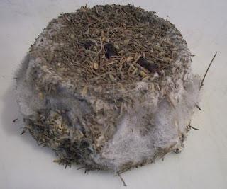 http://2.bp.blogspot.com/_WCcX760XRE0/SaKd7tEXtwI/AAAAAAAAAKU/3Ljpn6tdKSI/s320/Fluffy+mold.jpg