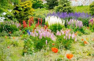 Summer Flowers Ushuaia Argentina