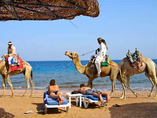 Camels Passing Our Resort - Dahab, Egypt