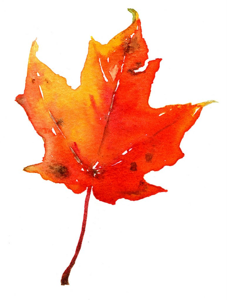 Maple Leaf Pathway Beautiful: Early Childhood Literacy Project: Seasonal Changes: Maple