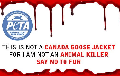 does canada goose jackets kill geese