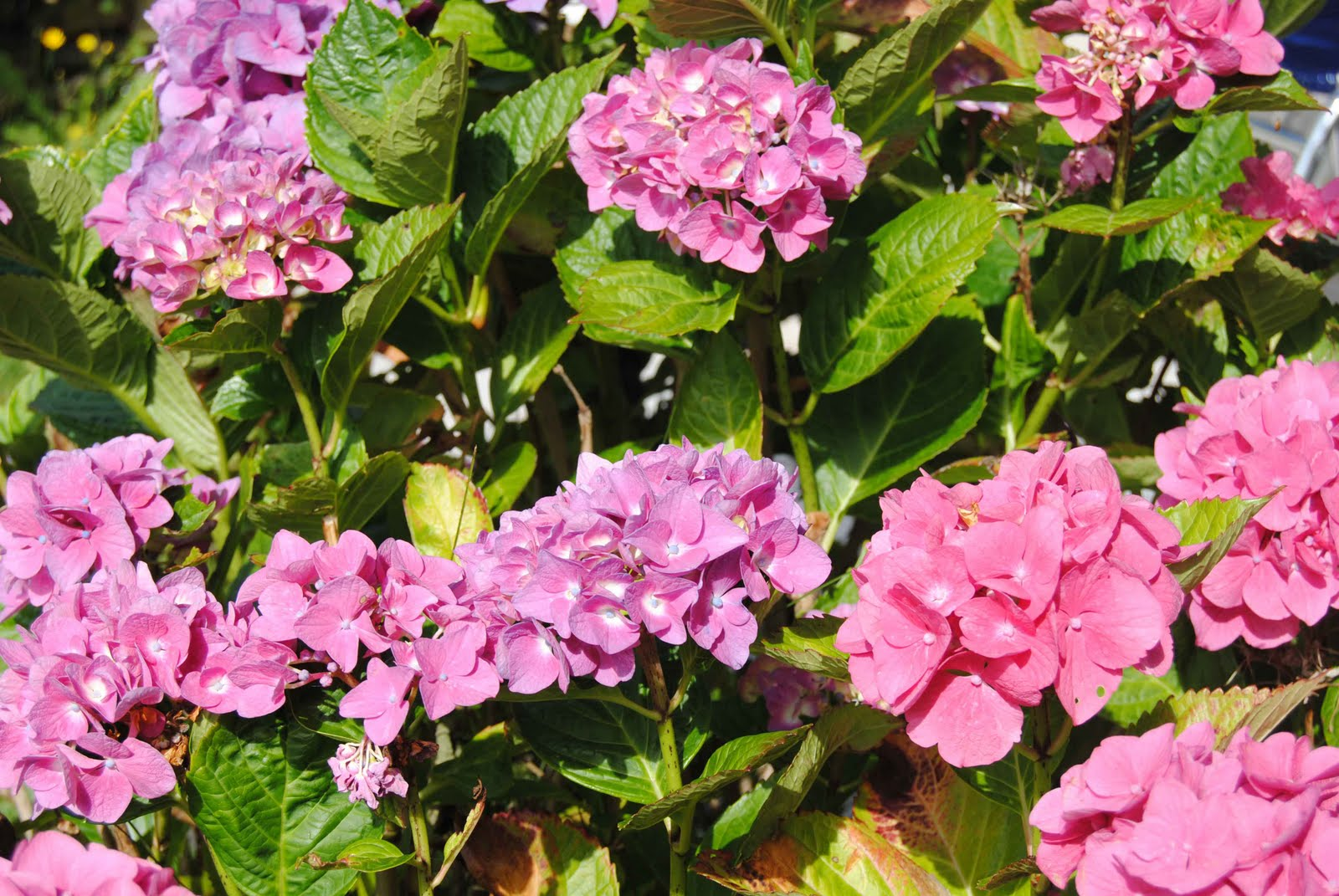 BretagneBilder Blumen im August