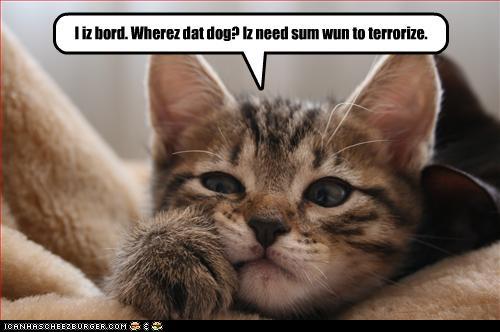 Can Cat Pass Urate Sediment
