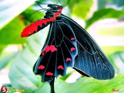 الفراشات %D8%A4.jpg