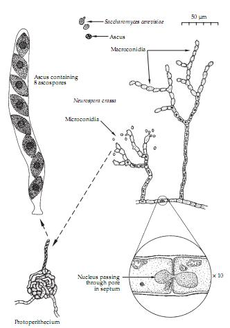 gametes and zygotes relationship trust