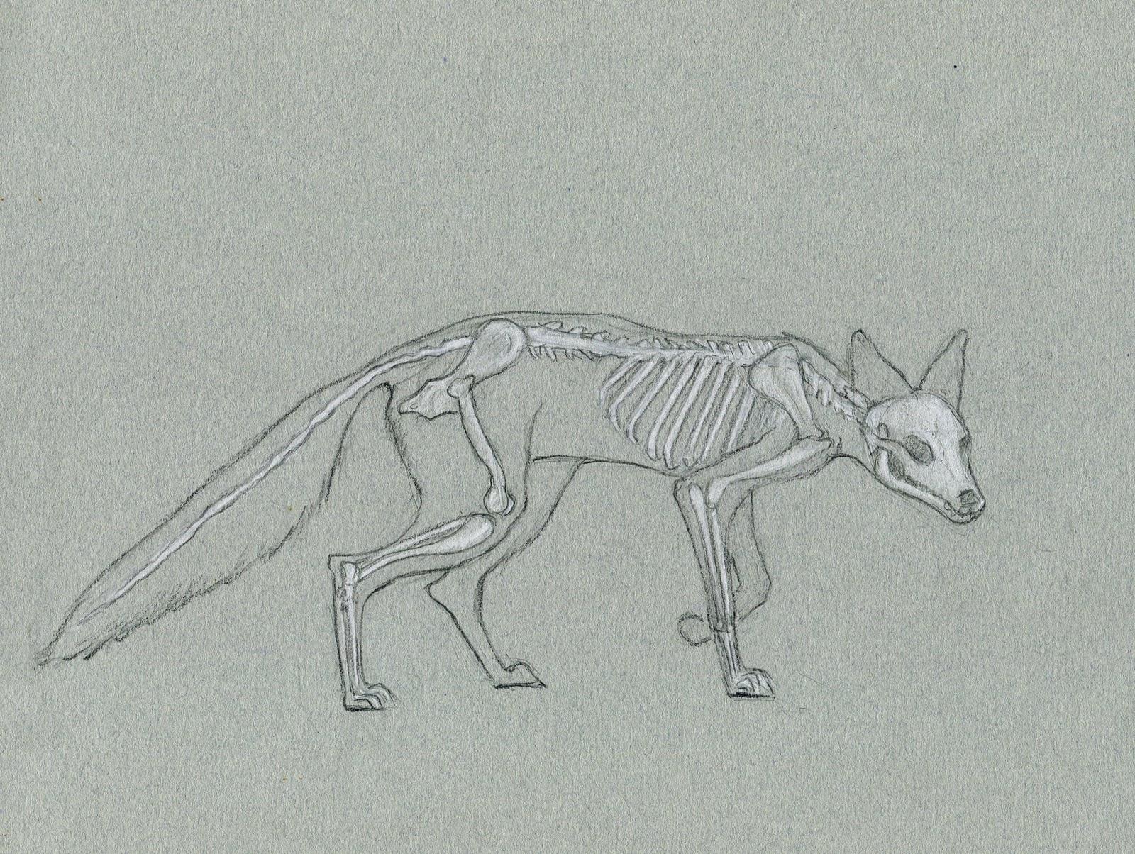 Alexis Demetriades Science Illustration: Quick Skeleton