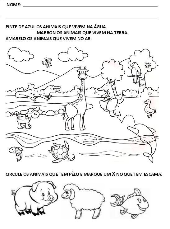 [Animais+domésticos+e+selvagens1.JPG]