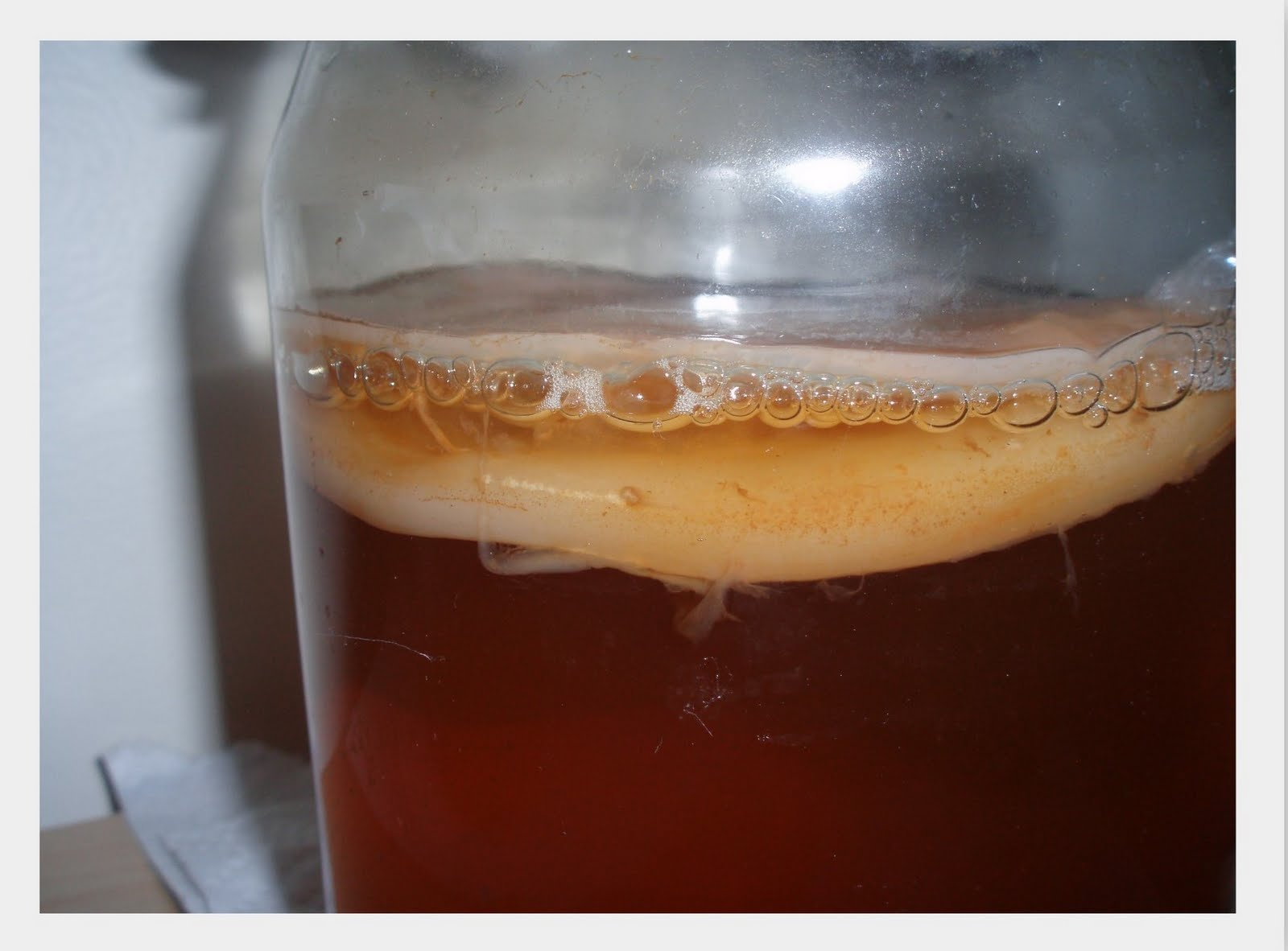 Image result for scoby