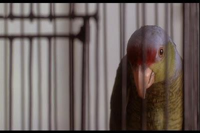 Vagebond's Movie ScreenShots: Boxing Helena (1993)