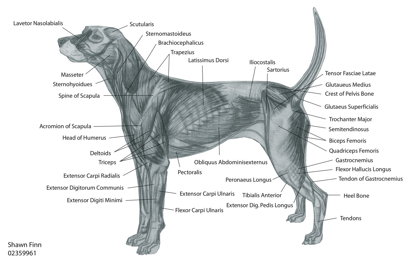 Dog Bone Diagram Fujitsu Air Conditioner Wiring Welcome Drawings