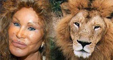 surgery plastic animals animal jocelyn cat wildenstein lion catwoman york should woman bitten bug never lookalike beyonce nairaland alikes pets