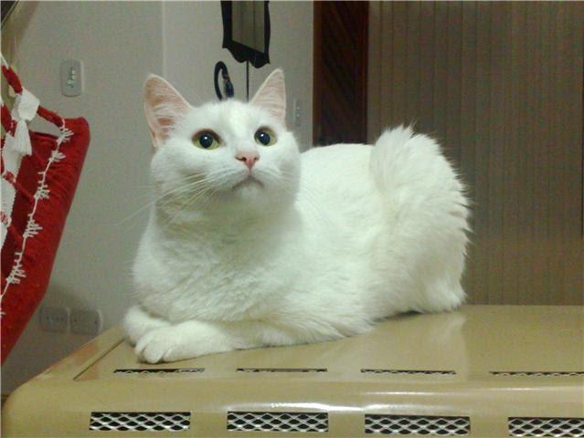 Encantador de gatos online dating 7