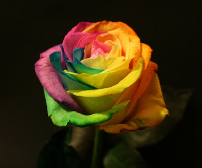 Just Cool Pics: Rainbow Roses Are For Real