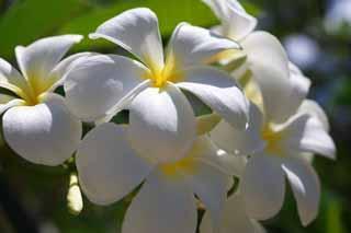 Garden Plant image