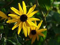 garden flower photo