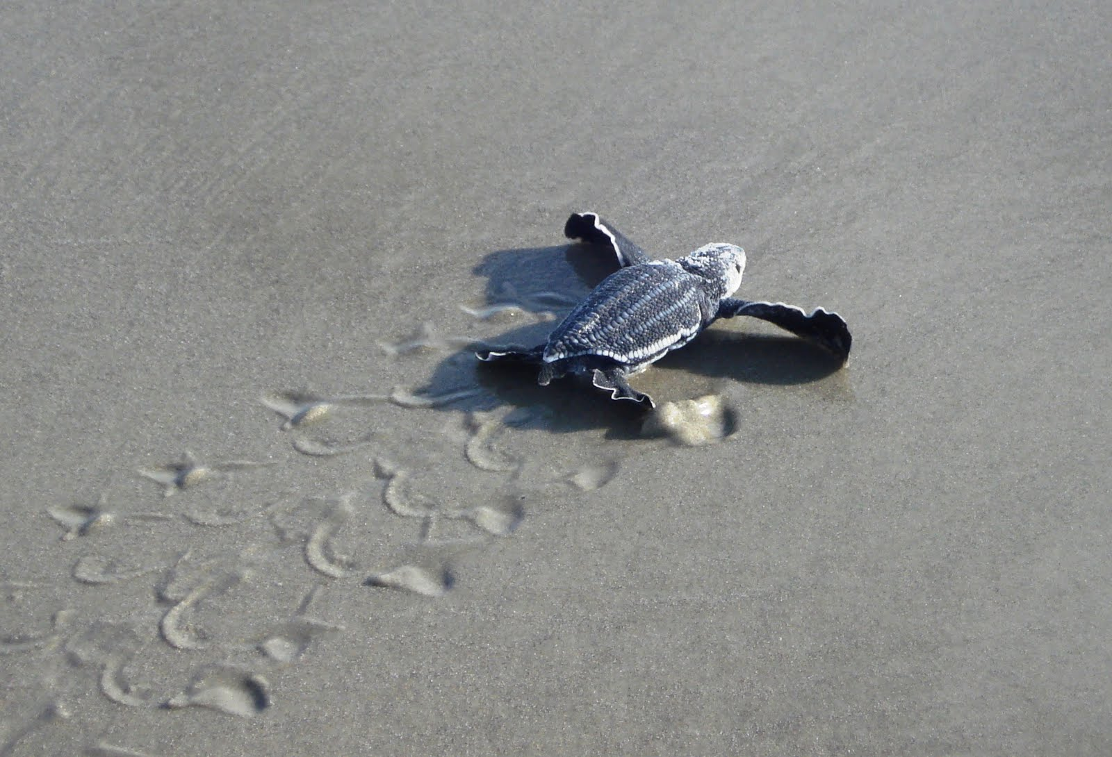 Sunshine Palate The Baby Sea Turtles Are Hatching