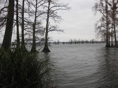 state park tennessee, lake shore, stumps, i-40
