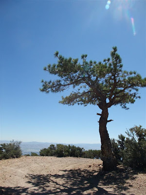 view of downtown reno, from the mountains, tree