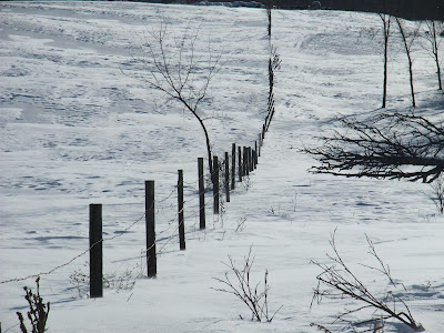 metal and wood fence in a field of snow