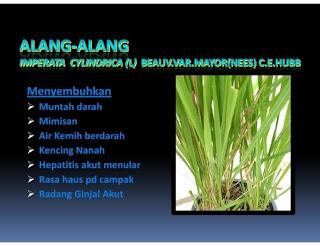alng-alang