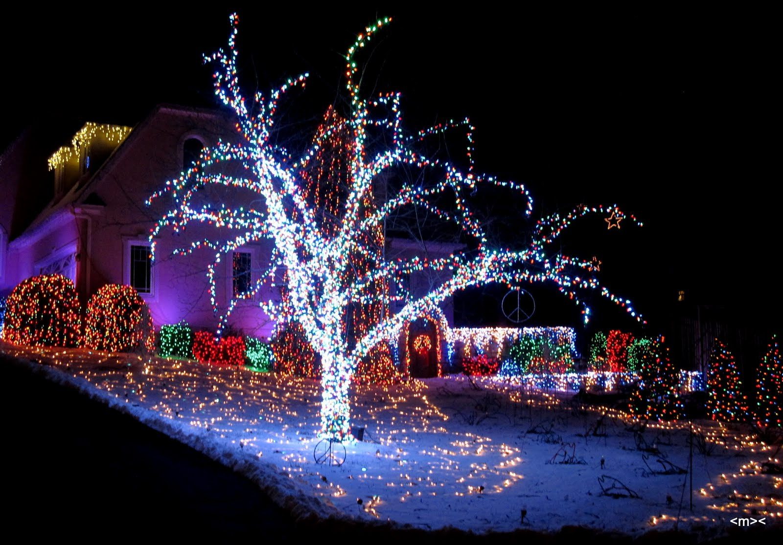 best service 487c5 14c91 Fishing In and Around Costa Rica, y MAS: Christmas Lights ...