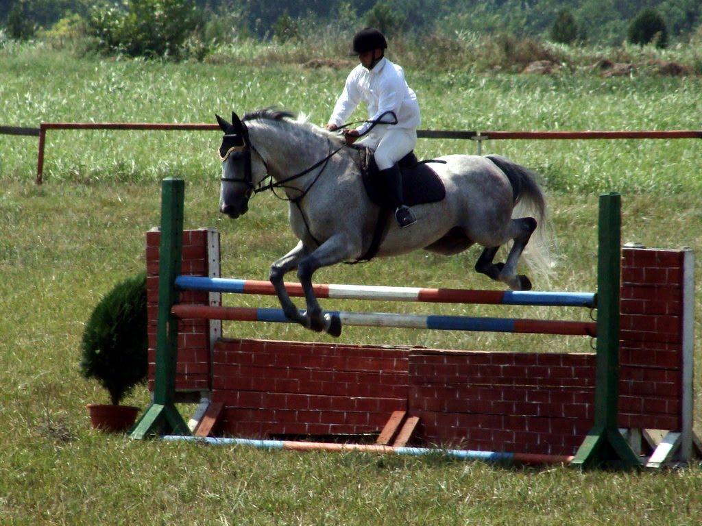 PHOTO ODYSSEY OF RICHARD: HORSES AT EQUINE SHOW OF MANGALIA