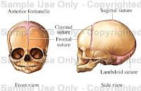Tipuri de articulații sinoviale în corpul uman - Doza de Sănătate