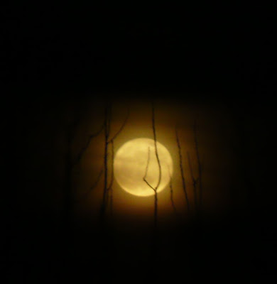 full moon through branches