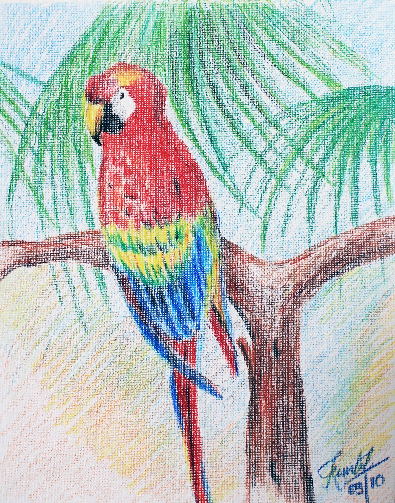 A Thing of Beauty: Macaw: Colored Pencil Art