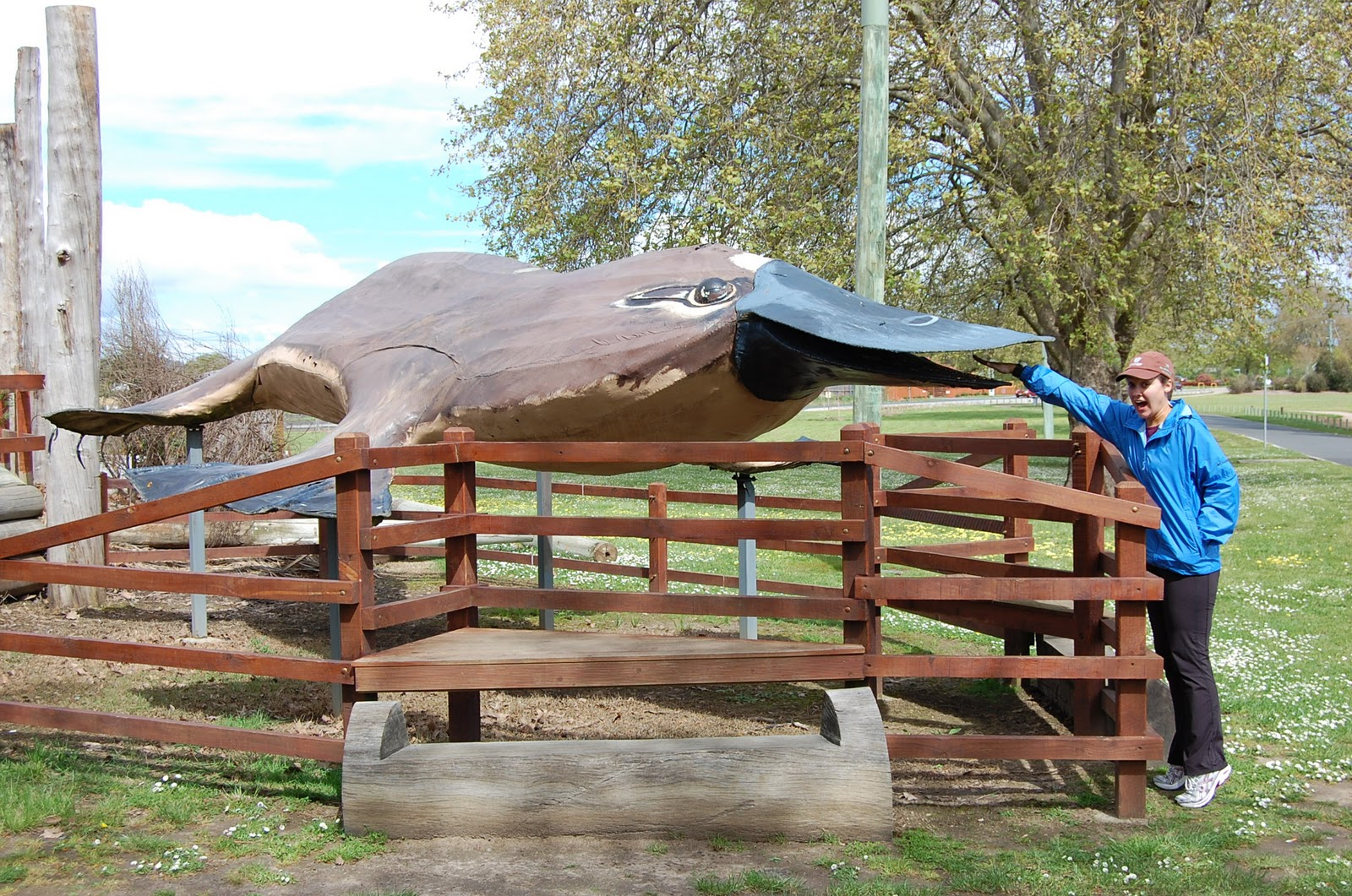Big Platypus de Latrobe