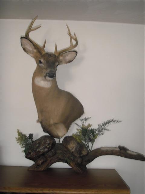 Ricks Wildlife Enhancement Deer Mounts