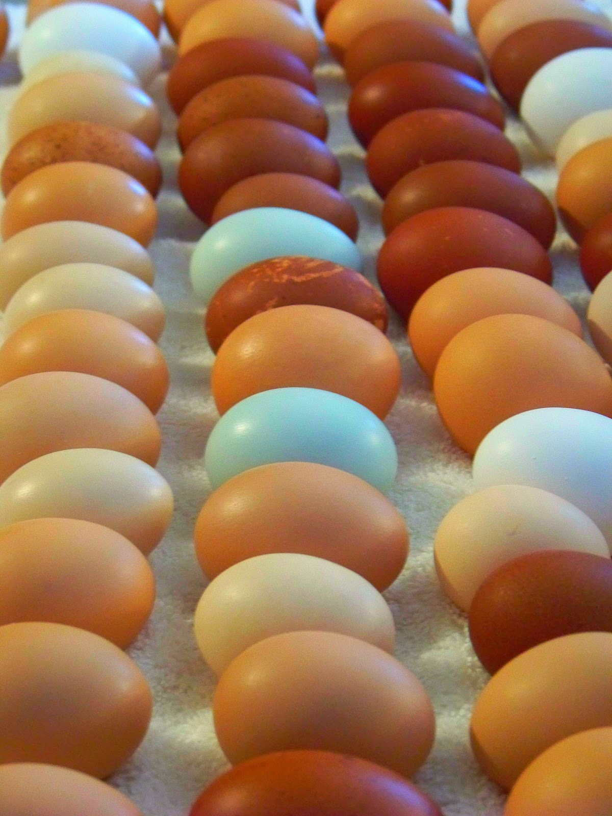 Iron Oak Farm How To Wash Eggs Again