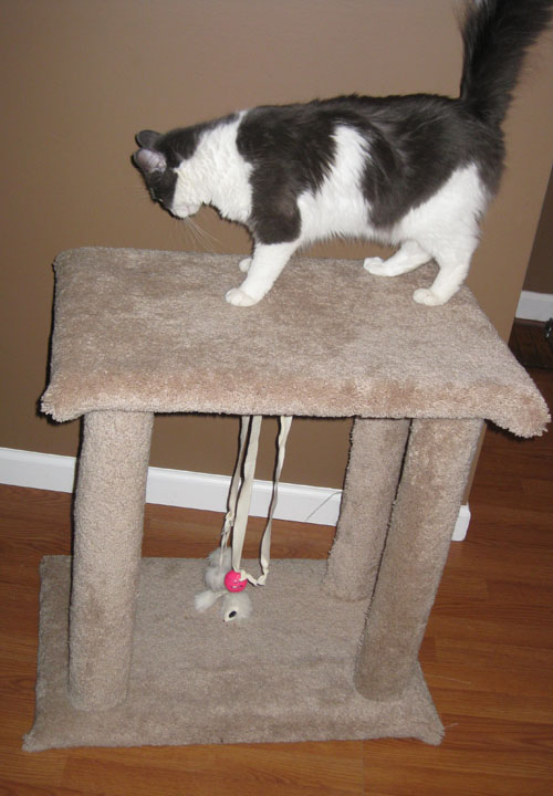 Sohl Design Diy Cat Scratching Post Tower