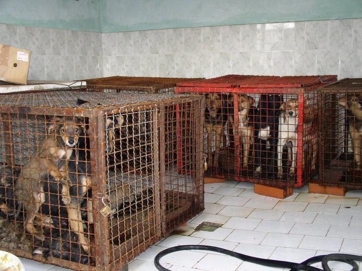 tötungsstation hunde ungarn