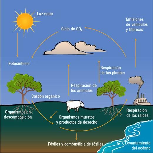 27 Ideas De Ciclo Del Carbono Ciclo Del Carbono Ciclo Del Agua Ciclo Hidrologico