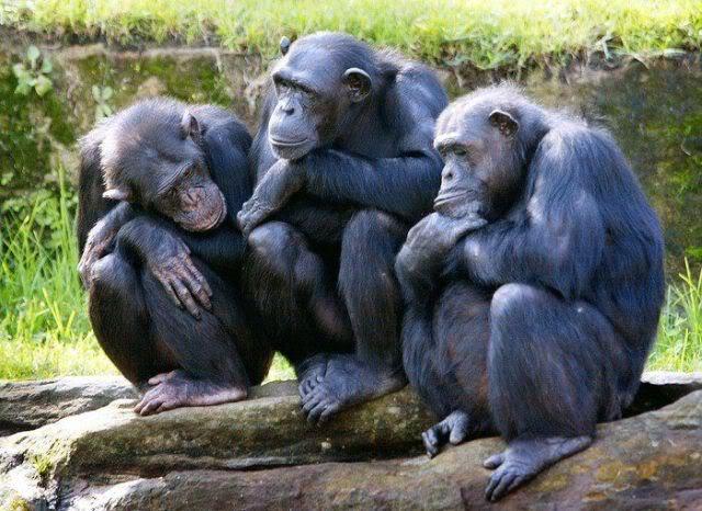 Fondos De Pantalla De Monos Graciosos