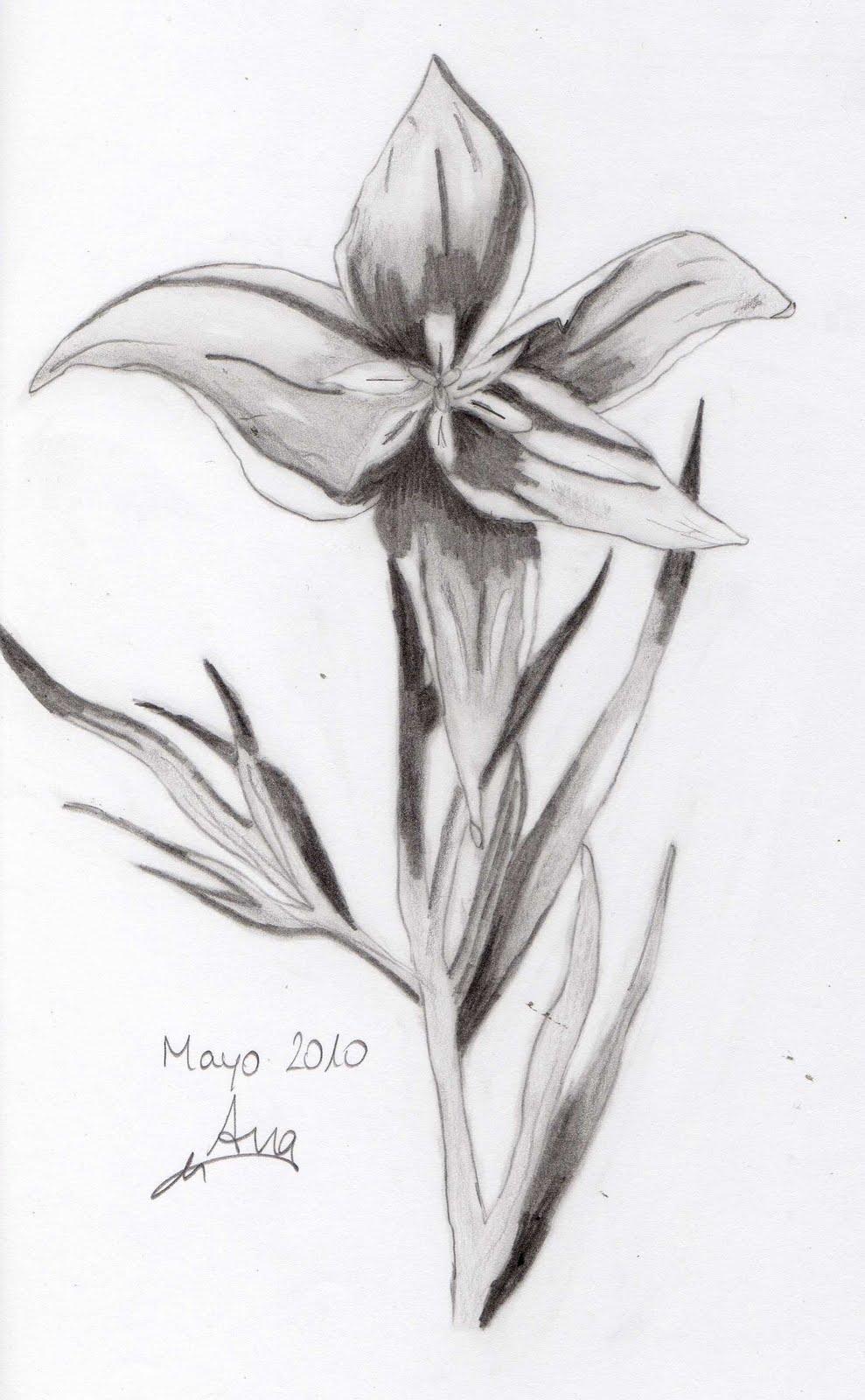 Imagenes De Flores Chidas Para Dibujar Imagui