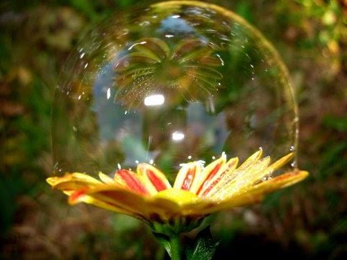 Uma Flor De Bom Dia: Imaginação Em Marcha: BOM DIA E UMA FLOR ESCONDIDA