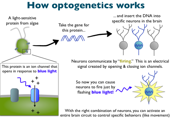 MIT's Boyden wins European prize for Optogenetics research