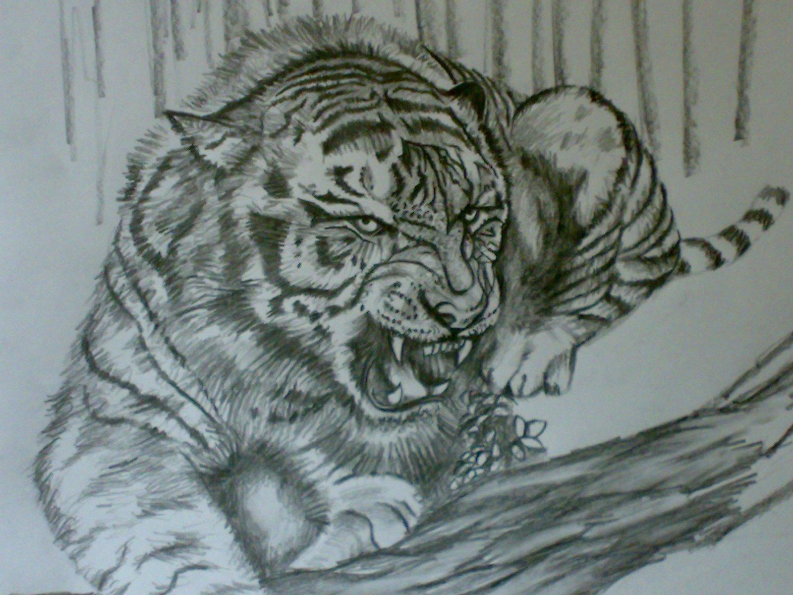 Angry Tiger Eyes Drawing