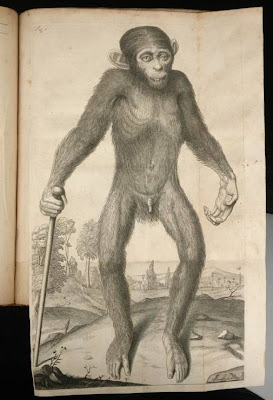 Tysson,Orang-Outang, sive Homo Sylvestris: or, The Anatomy of a Pygmie Compared with That of a Monkey, an Ape, and a Man