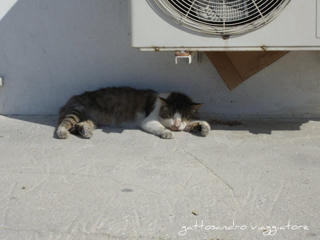 I gatti della Grecia