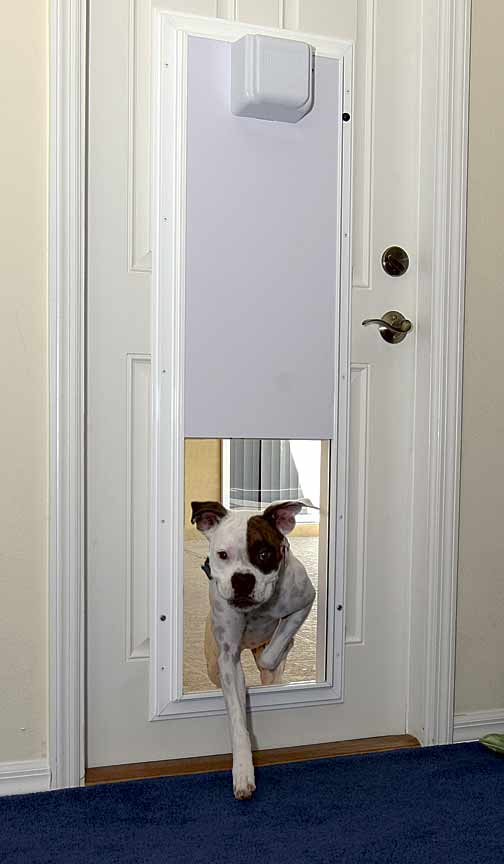 Selecting The Best Dog Door For Your Pets Pictures Of Dogs