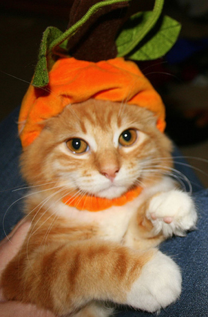 Halloween Kitty Costumes