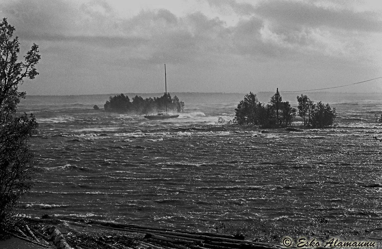 Mauri Myrsky