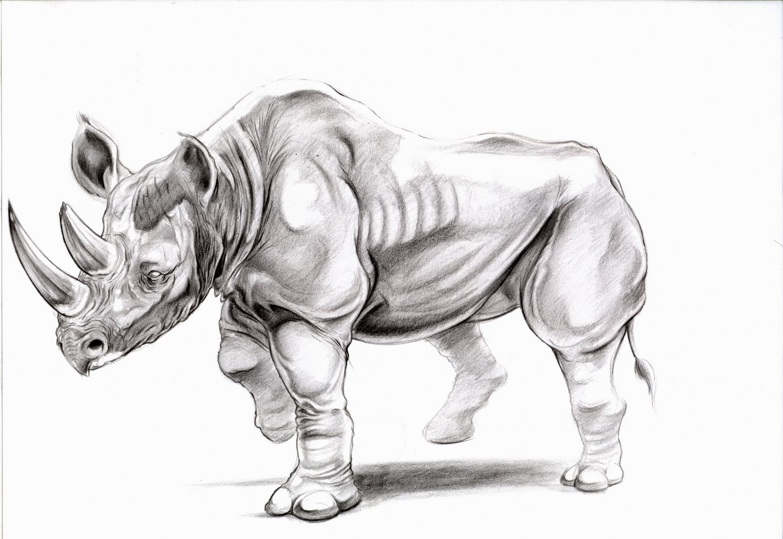 Animal Drawing: Rhino