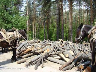 каруци с дърва