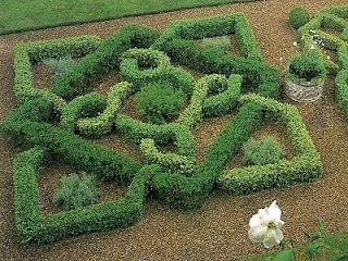 Westie, Art & Garden: Boxwood Swirls and Twirls Art