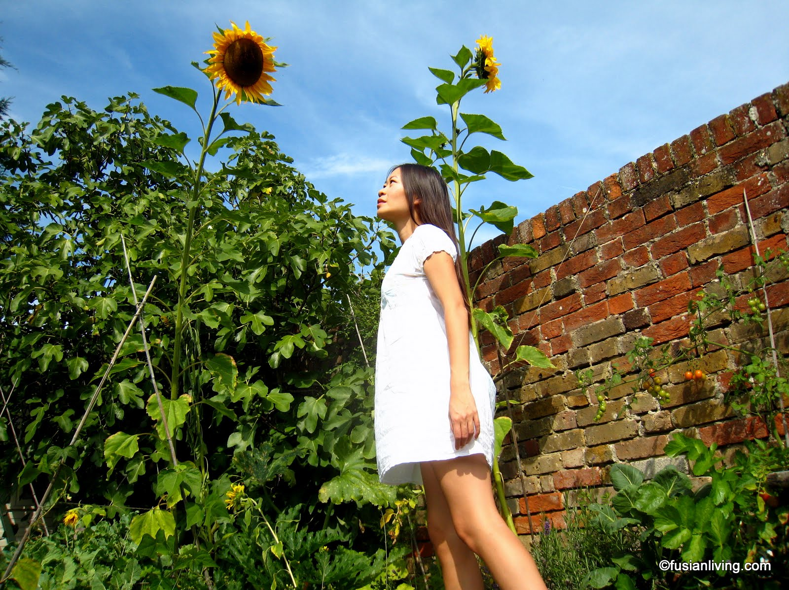 Thumbelina And Her Giant Sunflowers